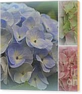 The Hydrangeas Of Late Spring Wood Print