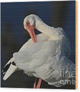 The Ibis Preen Wood Print