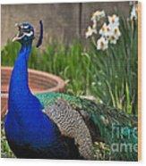 The Indian Peafowl Wood Print
