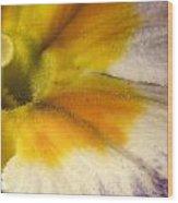 The Inner Circle Of A Primrose Wood Print