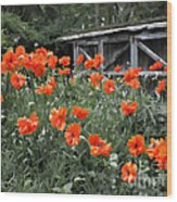 The Inspiration Of Orange Poppies Wood Print