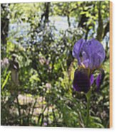 The Iris And St Francis Wood Print