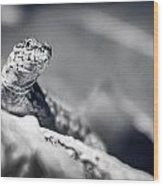 The Iron Lizard II Wood Print