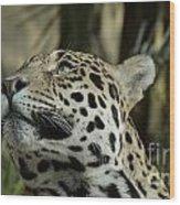 The Jaguar's Gaze Wood Print