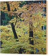 The Joy Of Being In Autumn Wood Print