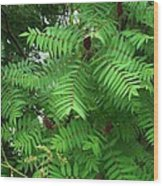 The Jutting Sumac Canopy Hungers For Light Wood Print