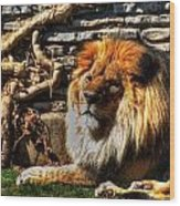 The King Lazy Boy At The Buffalo Zoo Wood Print