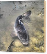The King Of The Pond Wood Print