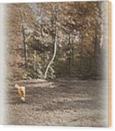 The Labradoodle On The Go Wood Print