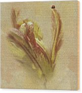 The Lady And The Parrot Tulip Wood Print