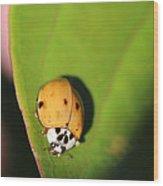 The Lady Bug Wood Print