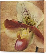 The Lady Slipper Orchid Wood Print