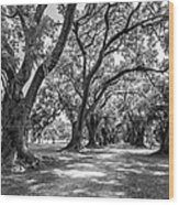 The Lane Bw Wood Print by Steve Harrington