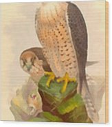 The Lanner Falcon Wood Print