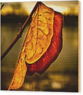 The Leaf Across The River Wood Print by Bob Orsillo