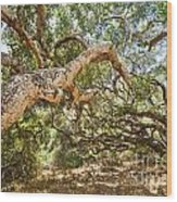 The Life Of Oaks - The Magical Trees Of The Los Osos Oak Reserve Wood Print
