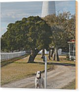 The Lighthouse Guardian Wood Print by Steven Ainsworth