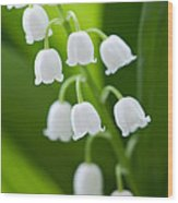 The Lily Of The Valley Wood Print by Boon Mee