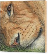 The Lion Sleeps Wood Print by David Stribbling