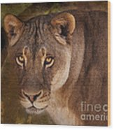 The Lioness  Wood Print