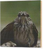 The Little Bird Wood Print