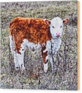 The Little Cow Wood Print