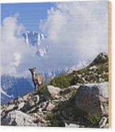The Little Ibex Wood Print