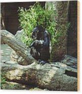 The Lone Chimp Wood Print