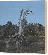 The Lone Juniper Wood Print