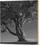 The Lone Tree Black And White Wood Print