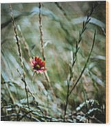 The Lonely Flower Wood Print