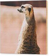 The Lonely Meerkat Wood Print