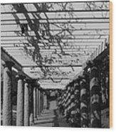 The Long Walk Wood Print