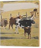 The Longhorn Cows Wood Print