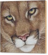 The Look Cougar Wood Print