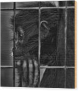 The Look Of Captivity Black And White Wood Print