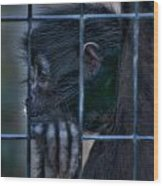 The Look Of Captivity Wood Print