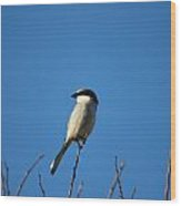 The Predator Lookout Shrike Bird Art Wood Print