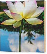 The Lotus Blossom Wood Print