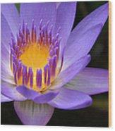 The Lotus Flower - Tropical Flowers Of Hawaii - Nymphaea Stellata Wood Print