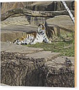 The Lounging Tiger 2 Wood Print
