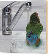 The Lovebird's Shower Wood Print by Terri Waters