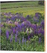 The Lupine Field Wood Print