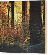 The Magic Of The Forest  Wood Print