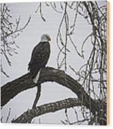 The Majestic Eagle Wood Print