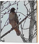 The Majestic Hawk Wood Print