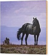The Majestic Stallion Wood Print