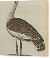 The Male Bustard Wood Print