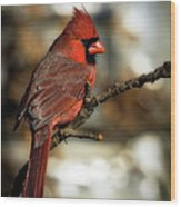 The Male Northern Cardinal Wood Print
