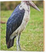 The Marabou Stork In Tanzania. Africa Wood Print